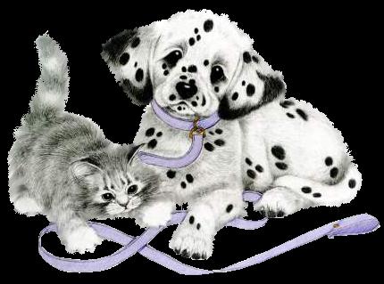 Vivre comme chien et chat