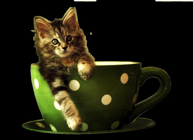 Résultat d'images pour images animées tasse de thé