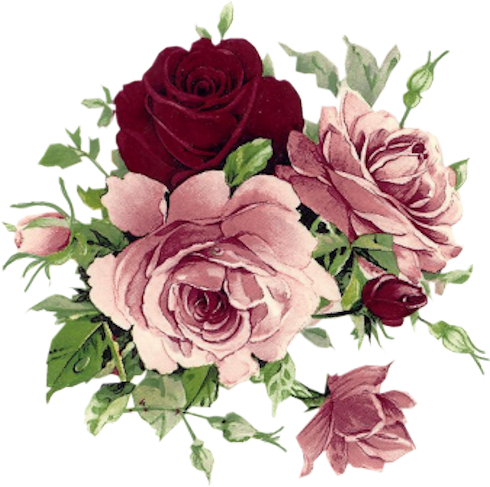 Roses jolies roses ...